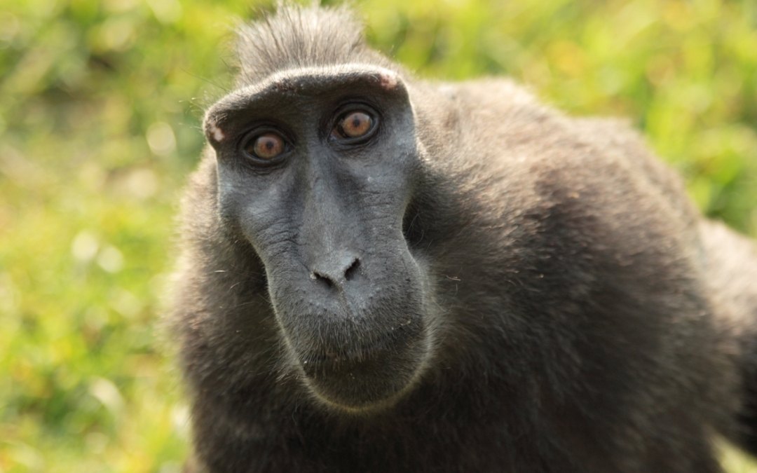 Overcoming Monkey Brain (so you can read!)